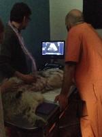 Curso abordaje ecográfico en veterinaria